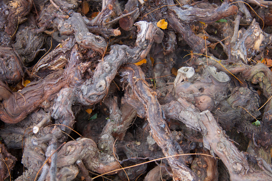 Old dried vines at Domaine Garby :  : Christopher Davies Photography